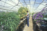 A Horticulturist Conducts Environmental Research in a Greenhouse at the University of AZ at Tucson Photographic Print