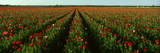 Wildflower Farm, Fredericksburg, Texas Photographic Print