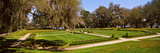 Spanish Moss Covered Trees in a Garden, Middleton Place, Charleston, South Carolina, USA Photographic Print by  Panoramic Images