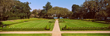 Trees in a Garden, Middleton Place, Charleston, South Carolina, USA Photographic Print by  Panoramic Images