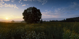 Tree on a Landscape, Joutseno, South Karelia, Southern Finland, Finland Photographic Print by  Panoramic Images