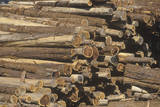 A Stack of Cut Logs Awaiting Processing at Lumber Mill Photographic Print