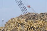 A Tall Crane Moving Logs at a Paper Mill from a Large Pile Photographic Print
