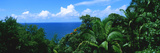 Trees in a Forest on the Coast, Hamakua Coast, Hawaii Islands, USA Photographic Print by  Panoramic Images