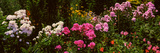 Flowers in a Garden, California, USA Photographic Print by  Panoramic Images