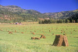 Field of Baled Hay, Telluride, CO Photographic Print