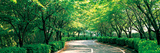 Tree Lined Road Osaka Shijonawate Japan Photographic Print by  Panoramic Images