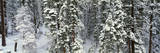 Winter Snowstorm in the Lake Tahoe Area, California Photographic Print