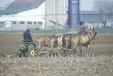 A Farmer and Horse Plowing the Fields in PA Photographic Print