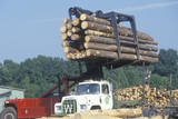 An Industrial Forklift Loading a Large Bundle of Logs onto a Truck for Transport Photographic Print