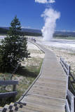Walkway Leading to Geyser, Yellowstone National Park, Wyoming Photographic Print