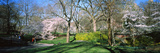 Trees in a Park, Central Park, Manhattan, New York City, New York State, USA Photographic Print by  Panoramic Images