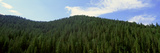 Pine Trees, Wyoming Photographic Print