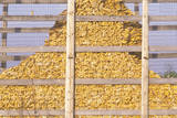 Mount of Harvested Corn Behind a Wire Fence Photographic Print