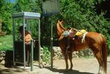 Suburban Cowboy Using a Pay Telephone, El Dorado California Reprodukcja zdjęcia