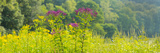 Summer Weeds, Cuyahoga Valley National Park, Cuyahoga County, Ohio, USA Photographic Print by  Panoramic Images