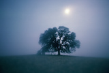 Solitary Oak Tree on a Misty Morning, California Photographic Print