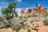 Desert Landscape, Arches National Park, Utah Photographic Print