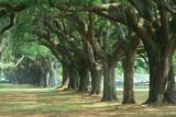 Oak Tree Lined Road at Boone Hall Plantation, Charleston, South Carolina Fotografie-Druck