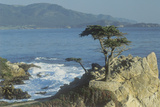 The Lone Cypress at Pebble Beach, California Photographic Print