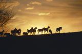 Silhouette of Herd of Horses Running on Horizon in Kentucky Photographic Print