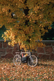 Bicycle Leaning Against Tree in Autumn, Washington D.C. Reproduction photographique