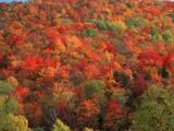 Autumn Foliage in Vermont Photographic Print