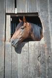 Horse in Barn Window, Northern California Photographic Print