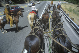 View of Team of Horses in Wagon Train During Reenactment Near Sacramento, CA Photographic Print