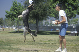 Dog and Man Playing Frisbee in CAnine Frisbee Contest, Westwood, Los Angeles, CA Photographic Print