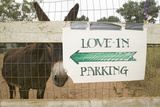 Donkey and Fence with Sign for Directions to Wedding Parking, Ojai, CA Photographic Print