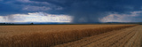 This Is a Summer Rain Storm over a Wheat Field. the Storm Clouds are Grey over the Field Photographic Print