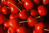 Close-Up of Picked Cherries Photographic Print