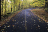 Fallen Autumn Leaves Lay on a Forest Road in the Greylock State Reservation, Massachusetts Photographic Print