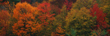 These Shows the Autumn Colors on the Foliage of the Trees Photographic Print