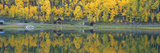 Autumn Aspens Along Route 550, North Durango, Colorado Photographic Print
