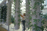 Hydroponic Farming at the Epcot Center, FL Photographic Print