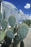 Cacti at the University of Arizona Environmental Research Laboratory in Tucson, AZ Photographic Print