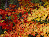 Autumn Colors in New England Photographic Print