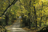 Leafy Trees Shade a Narrow Road in Rural New England Photographic Print