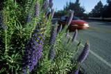 Spring Flowers, Route 1, CA Photographic Print