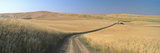 Dirt Road Through Wheat Field, Kamiak Butte, S.E. Washington Photographic Print