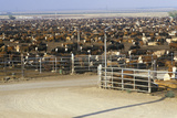 Cattle Feed Lots Photographic Print