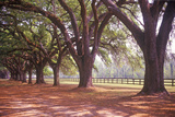 Tree Lined Road at Boone Hall Plantation, Charleston, Sc Fotografie-Druck