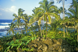 Landscape of Road to Hana, Maui, Hi Photographic Print
