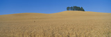 Wheat Fields, S.E. Washington Photographic Print