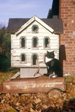 Black and White Cat Posing by Birdhouse, CO Photographic Print