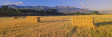 Hayfields in Upper Ojai Valley, California Photographic Print