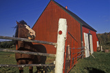 Horse and Red Barn, Cape Breton, Nova Scotia Photographic Print