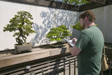 Artist Draws Japanese Bonsai Tree in National Arboretum, Washington D.C. Photographic Print